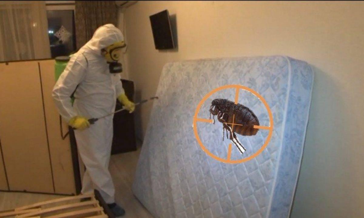 Трава от блох в доме и в квартире, какая эффективнее отпугивает паразитов?