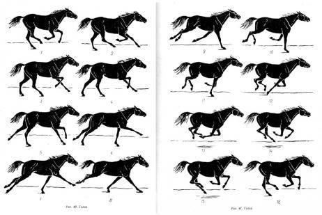 Галоп - самый быстрый аллюр лошади