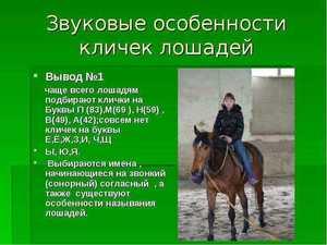 Популярные клички лошадей