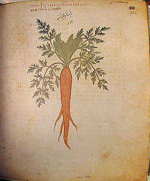 Почему морковь оранжевая: когда и как стала такой окраски