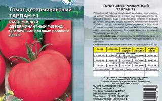 Огурцы задор f1 – вкусные корнишоны для свежего потребления и консервирования