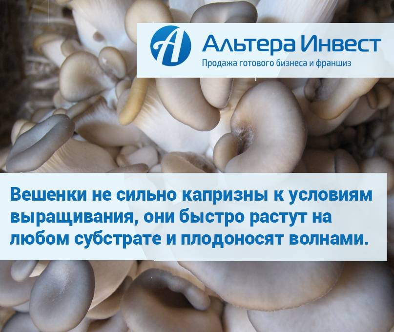 Бизнес на выращивании грибов вешенка (2021) — с чего начать и сколько можно заработать - 760 идей для открытия бизнеса