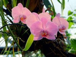 Какие оттенки цвета бывают у орхидеи? обзор  декоративных цветов фаленопсис