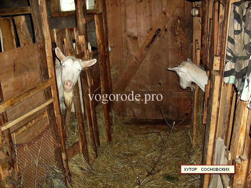 Требования к постройке сарая для фермерских коз