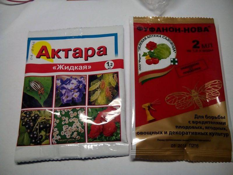 Актара: инструкция по применению для плодовых деревьев и кустарников