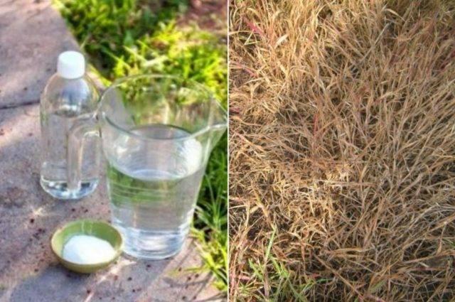 Уксус и соль против сорняков: пропорции, рецепты