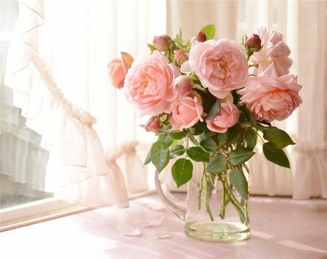 Как дольше сохранять срезанную розу в вазе с водой в домашних условиях: что добавить
