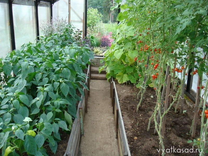 Когда и чем подкормить рассаду перца в теплице и в открытом грунте