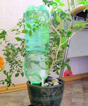 Система автополива комнатных растений: система капельного полива из капельницы