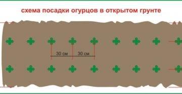 Кабачки кустовые: 6 сортов и правила агротехники