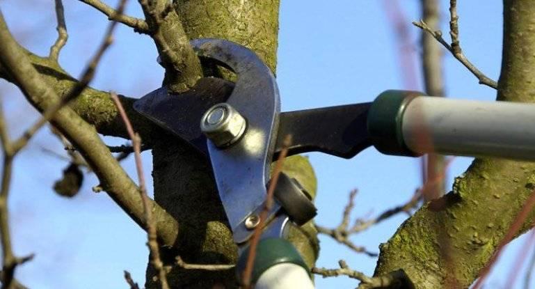 Инструкция по обрезке старых и молодых яблонь весной