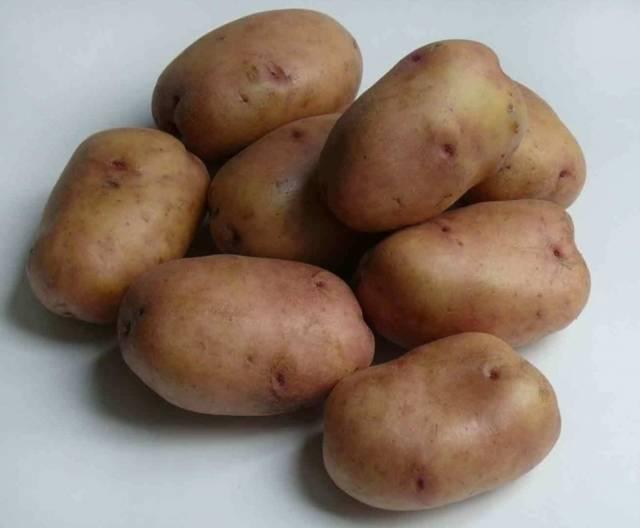 Сорта картофеля для урала (уральский регион): список