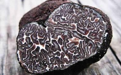 Грибной дождь: топ-5 самых дорогих грибов
