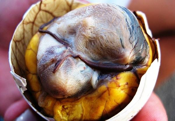 Инкубация утиных яиц в домашних условиях: режим инкубатора, таблица сроков, график закладки selo.guru — интернет портал о сельском хозяйстве