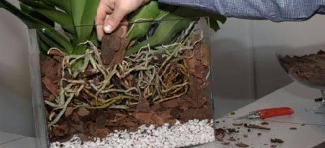 Орхидея: горшок для пересадки, какую кору использовать, что укладывать для дренажа и какие особенности роста нужно учитывать в домашних условиях? selo.guru — интернет портал о сельском хозяйстве