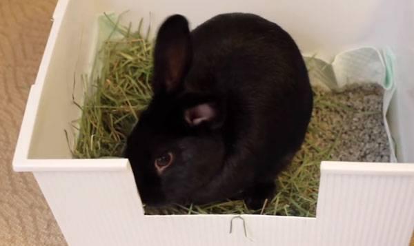Как приучить кролика к лотку: подбор емкости, методика, рекомендации специалистов