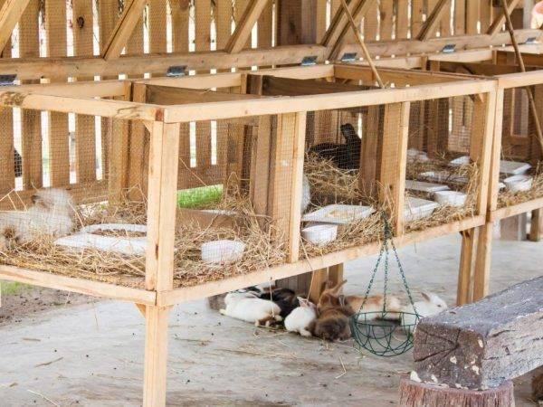 Самостоятельно сооружаем кроликам ясли для сена