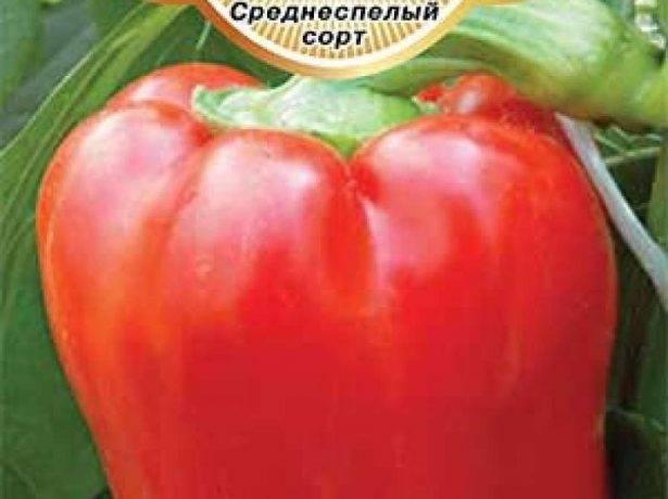 Перец богатырь: отзывы, фото, урожайность, характеристика и описание сорта, достоинства и недостатки