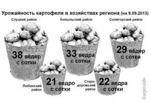 Выращивание картофеля с урожайностью 50 тонн с одного гектара
