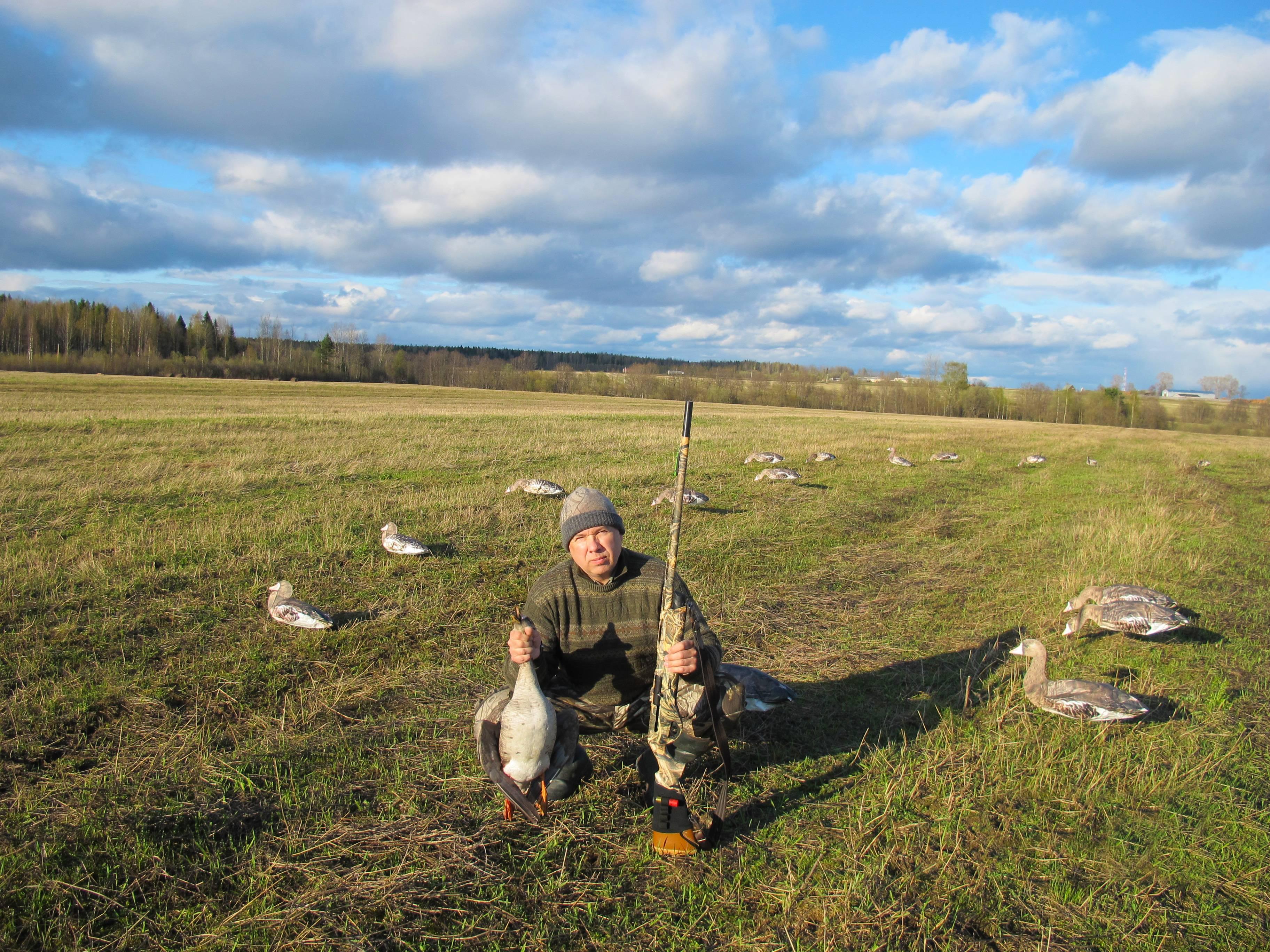 Охота на гуся – основные тонкости и тактика