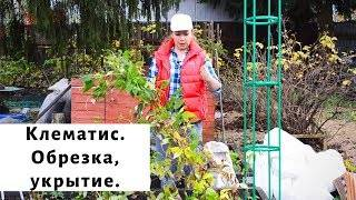Обрезка осенью и укрытие на зиму клематиса: фото + видео