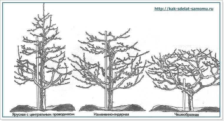 Обрезка молодого дерева: основные этапы и технология формирования кроны плодового дерева путем обрезки