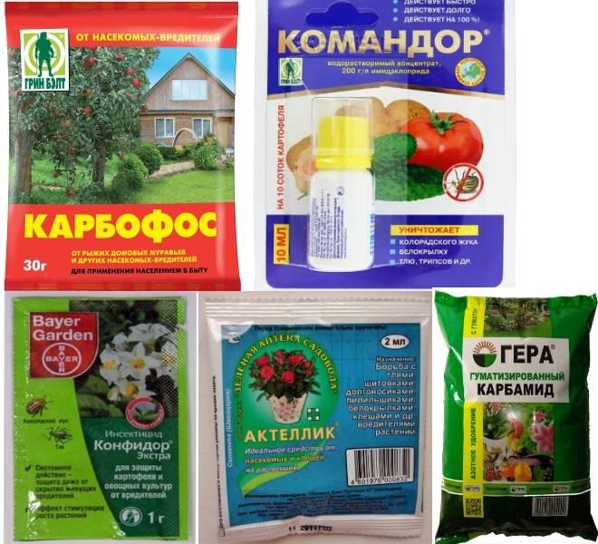 Чем обработать смородину осенью от вредителей и болезней: советы огородников (фото, видео)