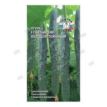 Огурец китайский болезнеустойчивый f1: выращивание
