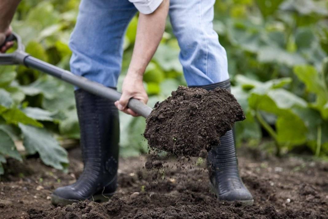 Боронование почвы: что это такое и как правильно обработать землю - плантации