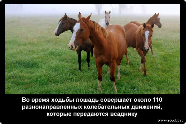 Все самое интересное о лошадях, необычные факты