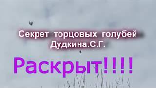 Архив голубеводов мира. туркменские бойные голуби