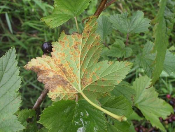 Правильная обработка сада осенью от вредителей и болезней
