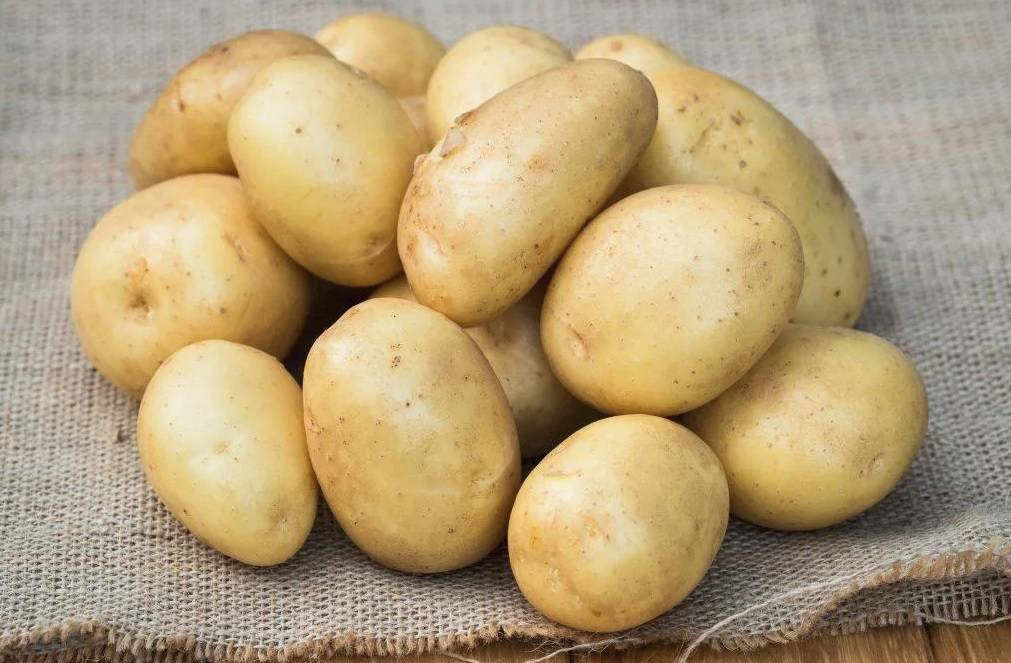 Сорт картофеля джелли: описание и характеристика, отзывы