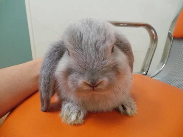 Вакцинация кроликов. нужны ли кроликам прививки | ветеринарная клиника