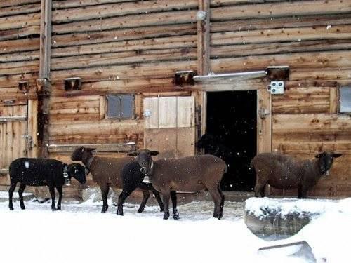 Овчарня для овец своими руками: инструкция, фото и видео овчарня для овец своими руками: инструкция, фото и видео