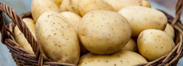Фиолетовая картошка: сорта, полезные свойства, отзывы