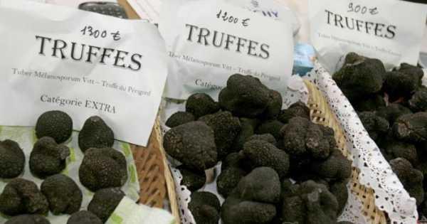 Где в россии растут грибы трюфели - цена при покупке