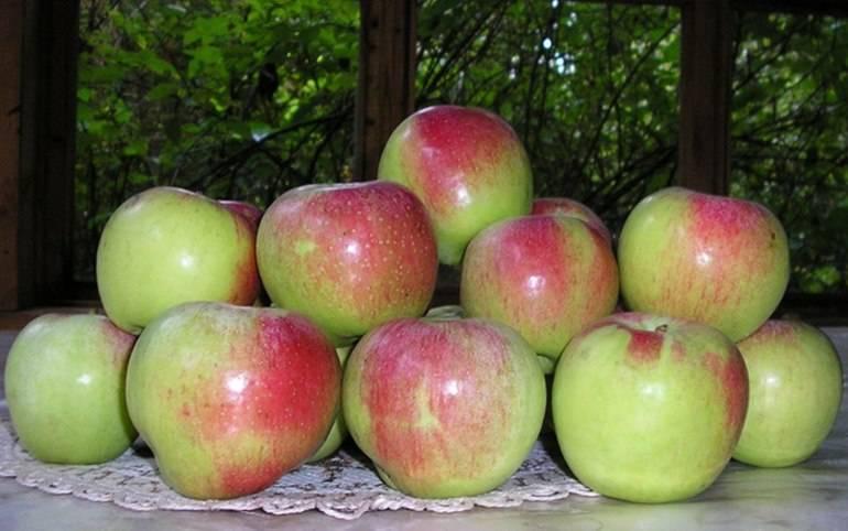 Когда собирать осенние яблоки: сроки сбора самых распространенных сортов, как правильно снять с дерева и в какое время снимать плоды для хранения их на зиму? selo.guru — интернет портал о сельском хозяйстве
