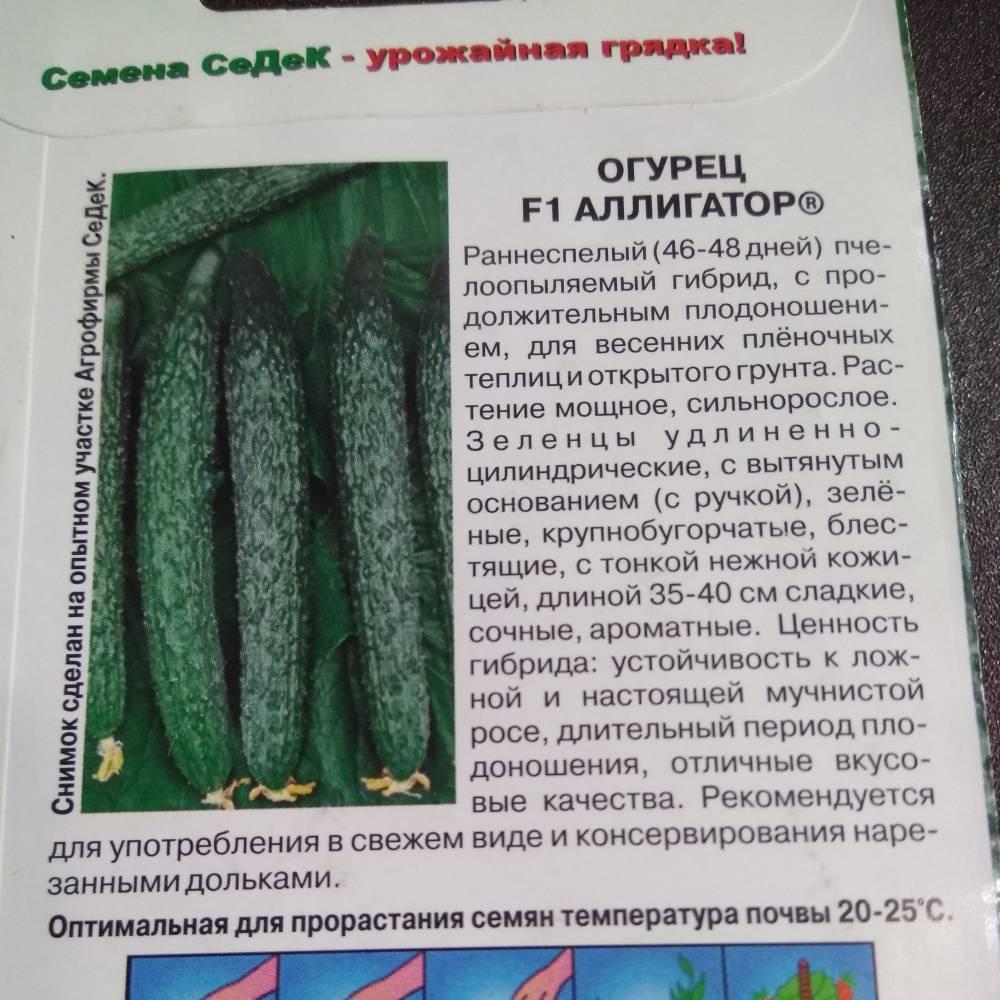 Сорт с колючими и длинными плодами — огурец аллигатор f1: полное описание