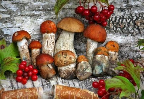 Как чистить белые грибы: советы и рекомендации, нюансы обработки