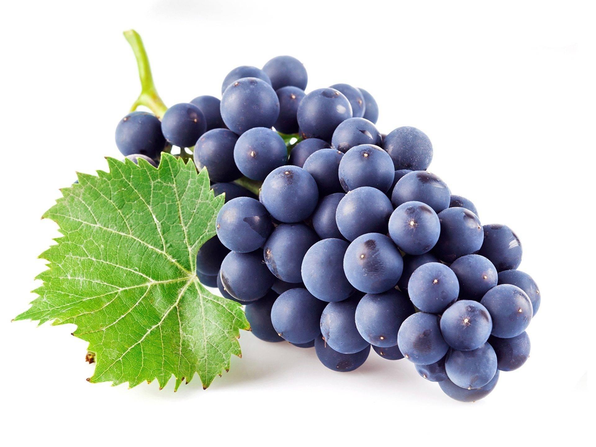 Виноград саперави северный: описание, фото и отзывы