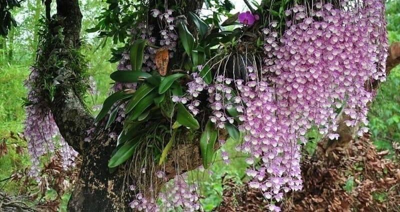 Виды орхидей: фото, названия, виды домашних орхидей