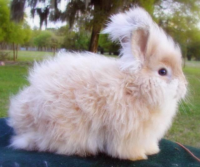 Сколько живут кролики в домашних условиях: обычные и декоративные породы, их описание