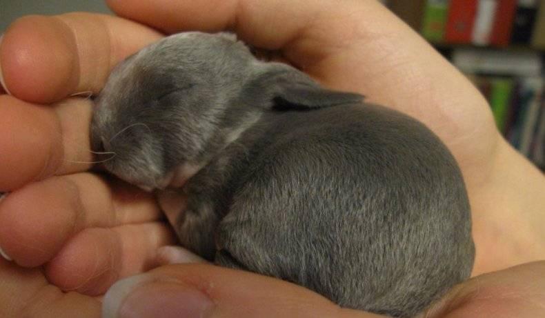 В каком возрасте крольчат отсаживают от крольчихи?