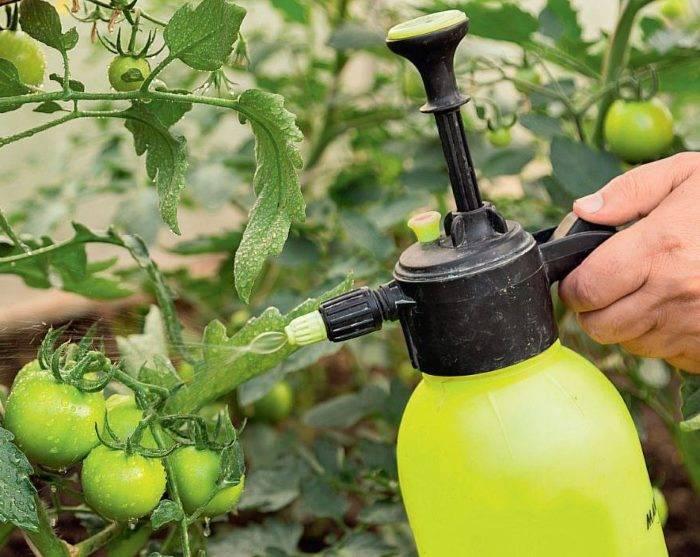 Замучили гусеницы на помидорах – эти средства избавят навсегда от них