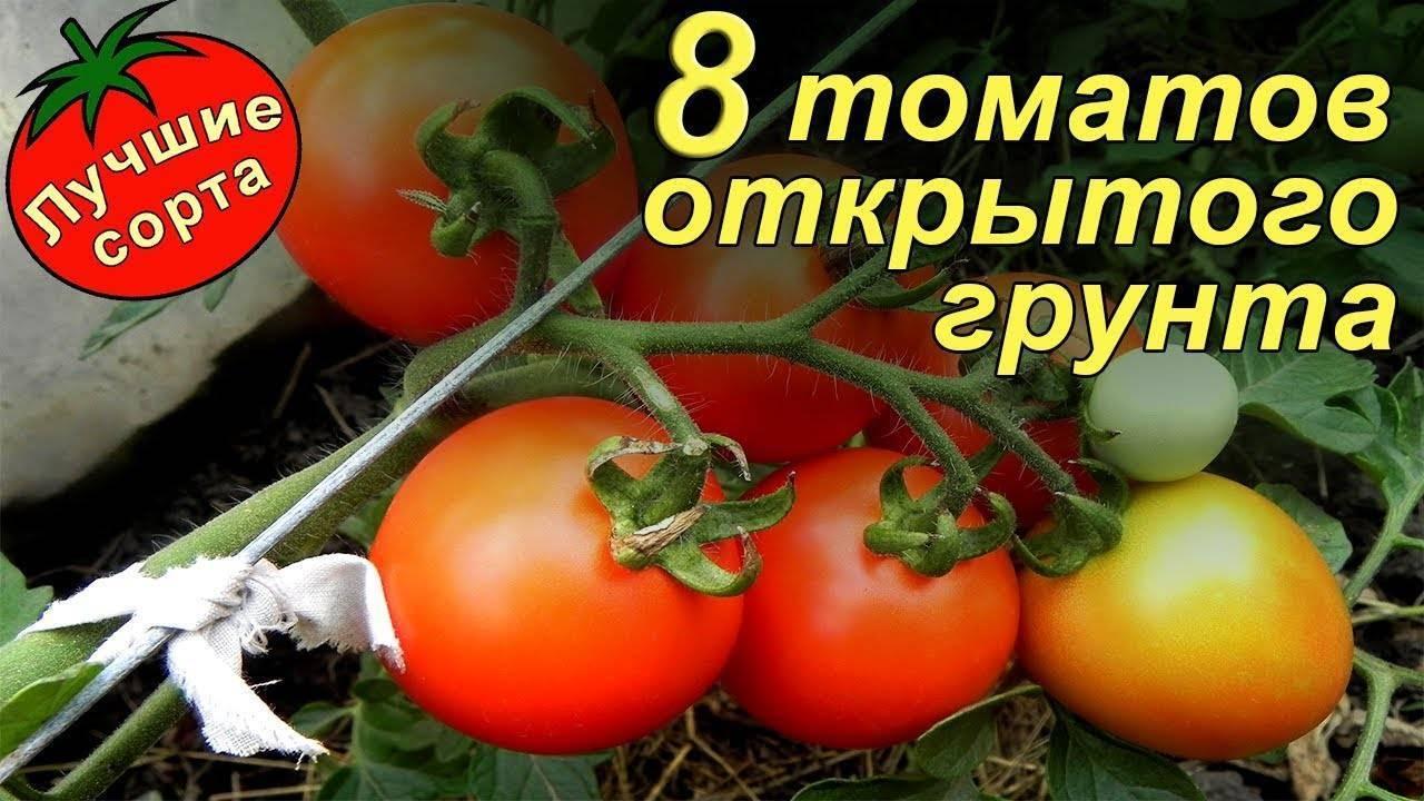Семена томатов лучшие сорта для сибири: урожайные и неприхотливые