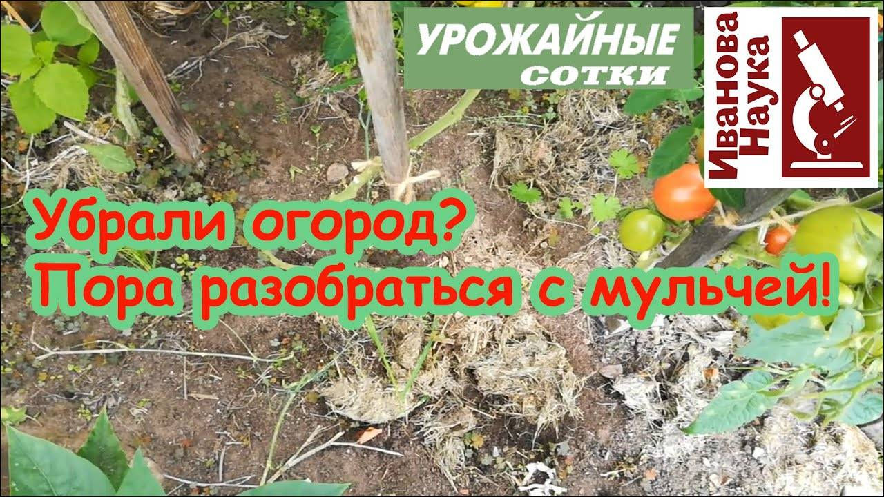 Чем обеззаразить почву в огороде — популярные методы и средства для обработки дачного участка