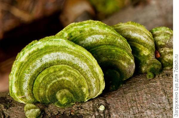 Самые необычные грибы в мире - подборка с фото