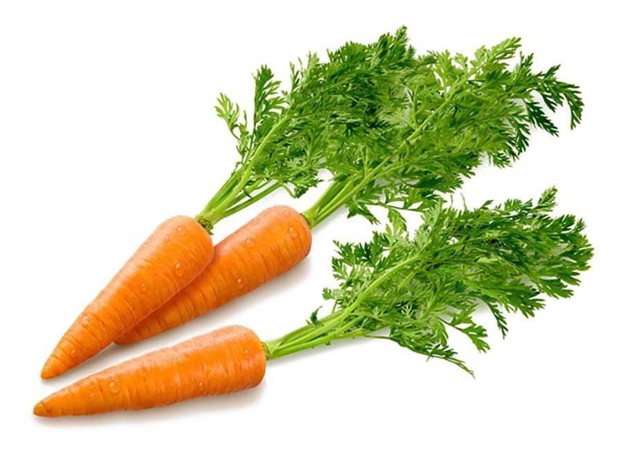 Морковь, мелкая. переработка на зиму. - сад, огород - страна мам