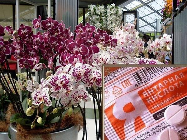 Как поливать орхидею? как правильно полить ее во время цветения в домашних условиях? как часто нужно это делать? как надо поливать после пересадки?